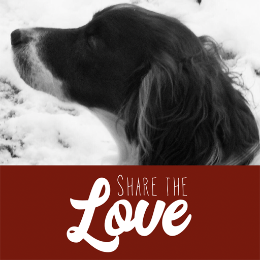 Buddy & Vivian | Share the Love 2019