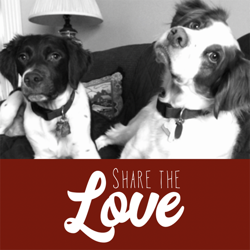 Sparky & Dave | Share the Love 2019